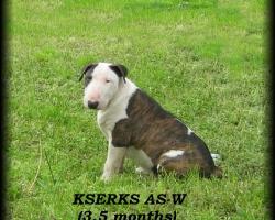 Kserks AS-W