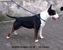 CH Double Dragon AS-W
